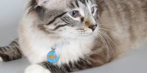 Cat ID Tags