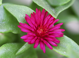 Pink flower on bed of green leaves