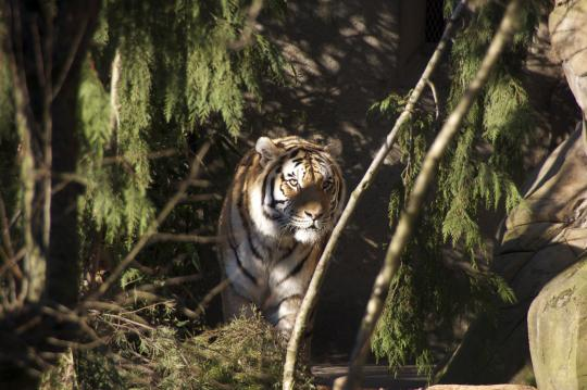 2010 Year of the Tiger -