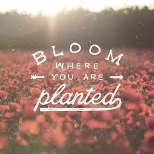 Bloom where you're planted,