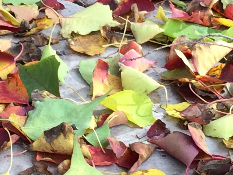 Fall, Johanna Utter, L.Ac., FABORM in Davis, CA