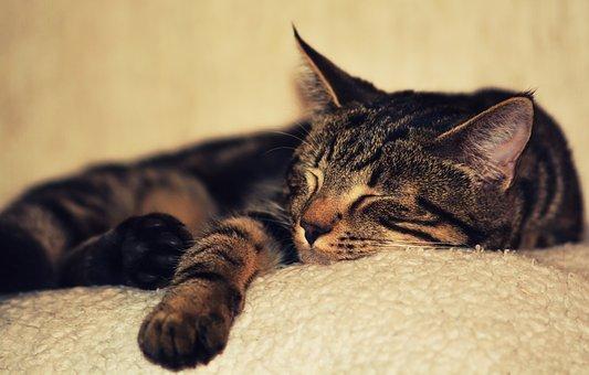 Sleep Essentials, Johanna Utter, L.Ac., FABORM in Davis, CA