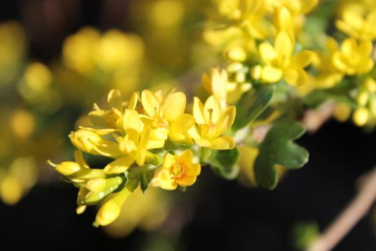 Spring!, Johanna Utter, L.Ac., FABORM in Davis, CA