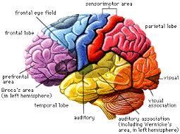 Neurofeedback and Biofeedback - CCM and Neurofeedback of Seattle in Seattle, WA