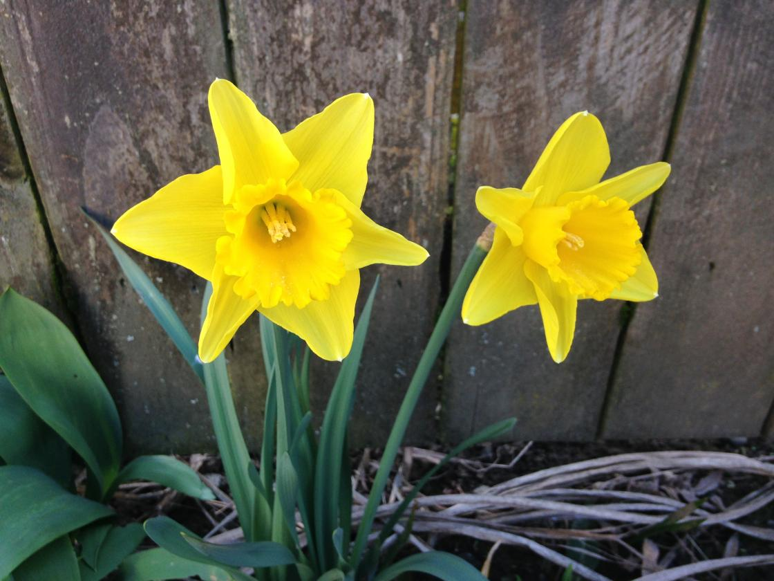 Spring Is A Great Time For A Tune-up, Rick DeTroye L.Ac. LLC in Northeast Portland, OR