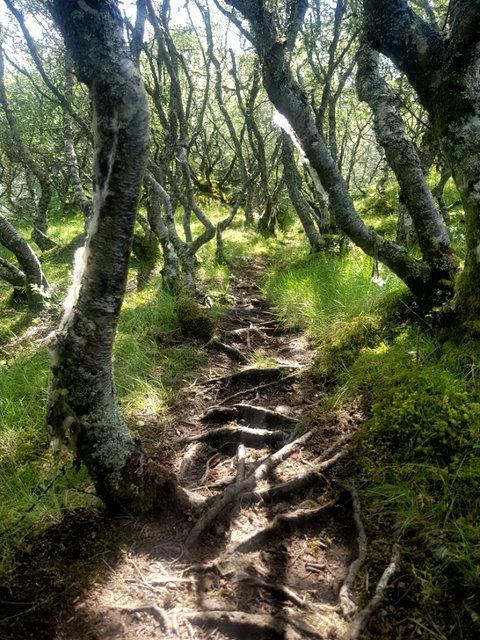 A dirt track through woodland