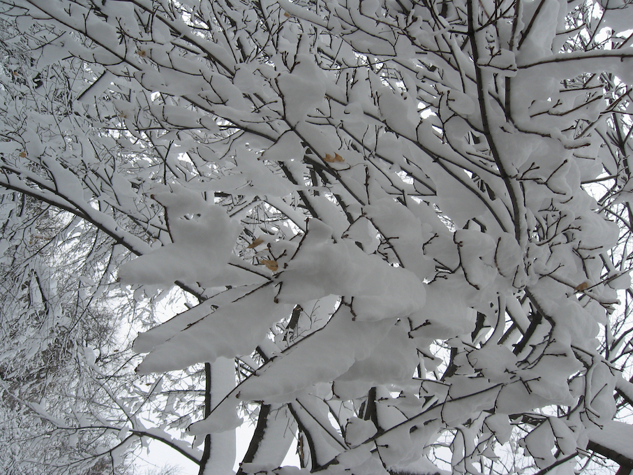 "snow ""webbing"" among branches"