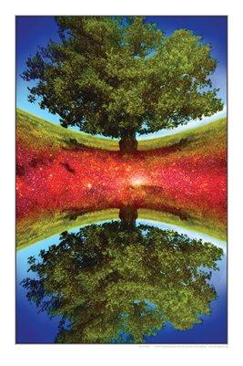 Tree of Stars