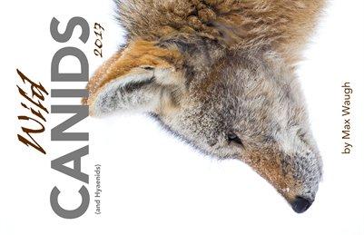 2017 Wild Canids Calendar