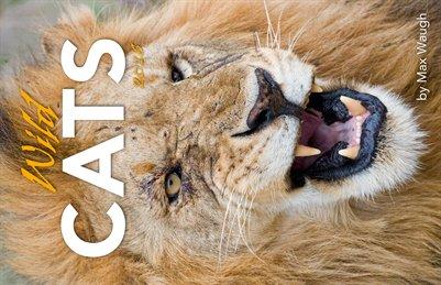 2016 Wild Cats Calendar