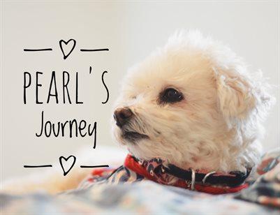 Pearl's Journey