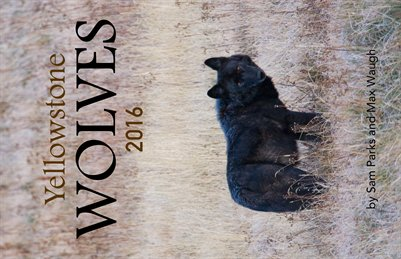2016 Yellowstone Wolves Calendar