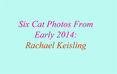 Six Cat Photos From Early 2014