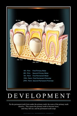 """DEVELOPMENT"" - (black) Dental Wall Chart DWC203"