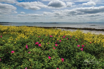 """Wildflowers on Galway Bay"" Irish Poster Print"
