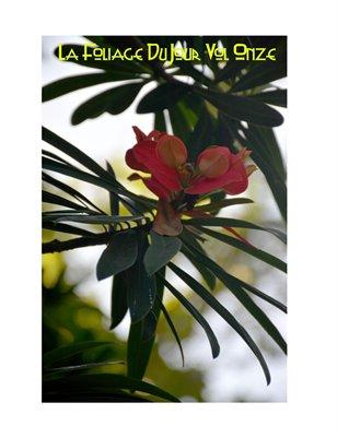 Les Foliage DuJour Vol 11
