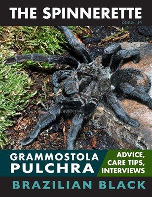 The Spinnerette Issue 14: Grammostola Pulchra