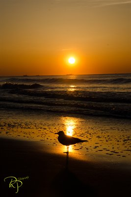 Sunrise-Myrtle Beach, South Carolina