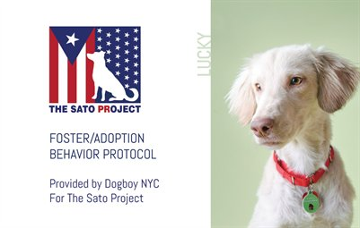 SATO - Foster/Adoption Behavior Protocol