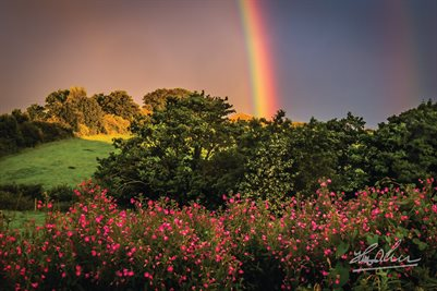 """County Clare Rainbow and Wildflowers"" (POSTER)"