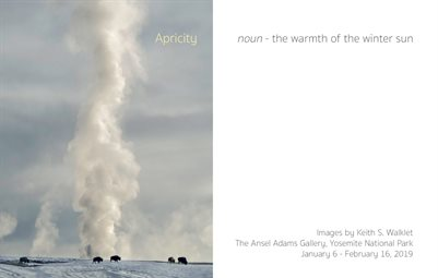 """Apricity: (noun) the warmth of the winter sun"" exhibit catalog"