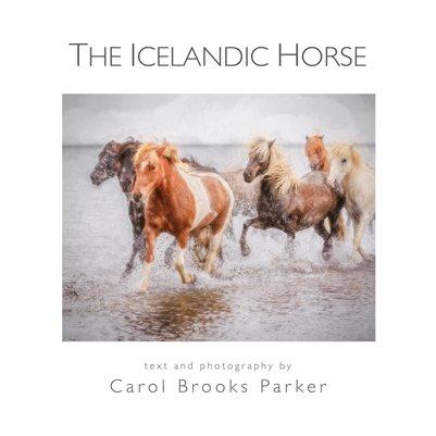 Icelandic Horse 12x12