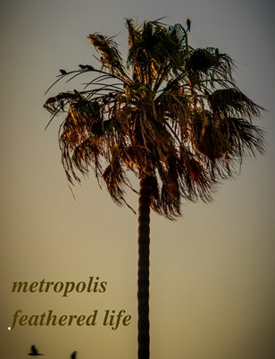 metropolis feathered life