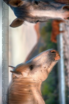 2014 Calendar - Poster Edition - Salt River Wild Horses
