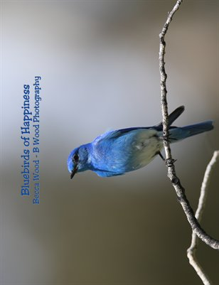 2015 Bluebirds of Happiness - 8x10 Calendar
