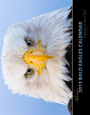 2013 Alaskan Bald Eagles Wall Calendar