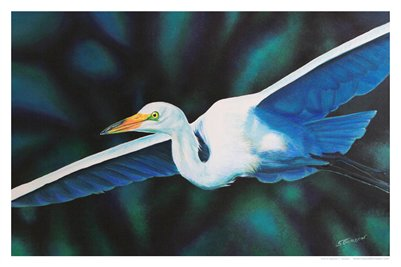 TROPICAL FLORIDA ART - WINGED GREAT EGRET 21