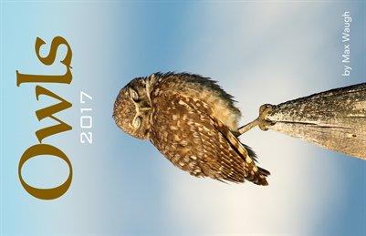 2017 Owls Calendar
