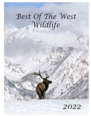 Best Of The West Wildlife