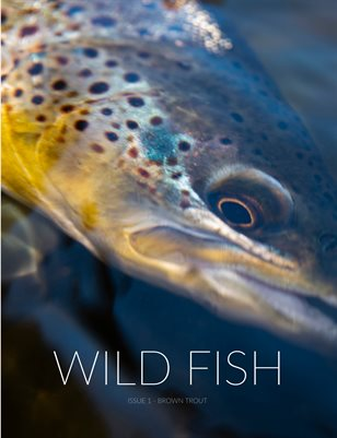 Wild Fish - Brown Trout