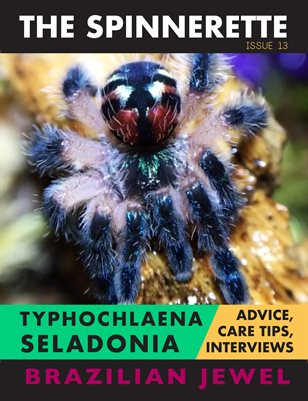 The Spinnerette Issue 13: Typhochlaena seladonia
