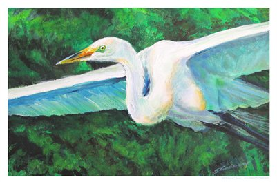 TROPICAL FLORIDA ART - WINGED GREAT EGRET 13