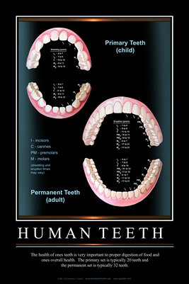 """HUMAN TEETH"" - (black) Dental Wall Chart DWC305"