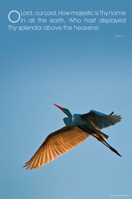Egret Poster-Splendor Above the Heavens!