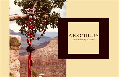 Aesculus The Buckeye Mala, LLC-The Book 2019