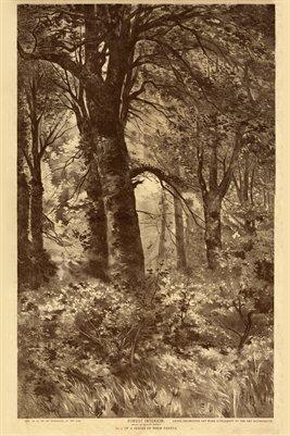 1891 Forest Interior