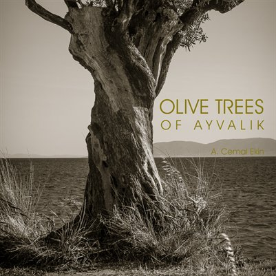 Olive Trees of Ayvalik