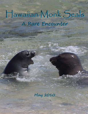 Hawaiian Monk Seals - A Rare Encounter