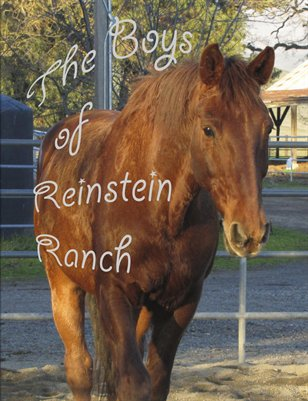 Boys of Reinstein Ranch