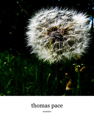 dandelion dreams