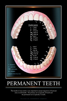 """PERMANENT TEETH"" - (black) Dental Wall Chart DWC303"