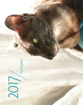 thesilverpaws cat calendar 2017