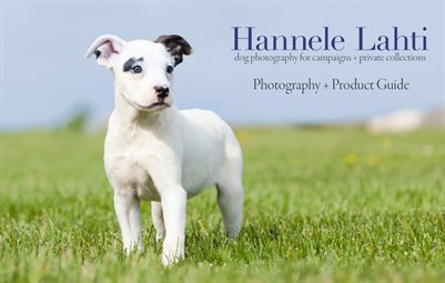 Dog Photography + Product Guide