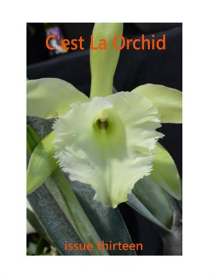 C'est La Orchid Issue Thirteen