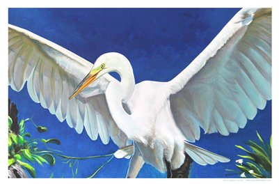 TROPICAL FLORIDA ART - EGRET MAJESTY 10