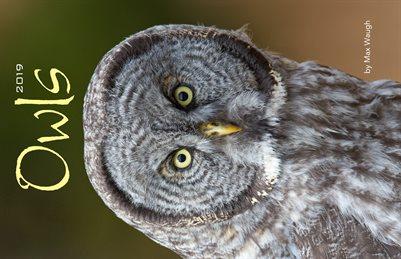 2019 Owls Calendar